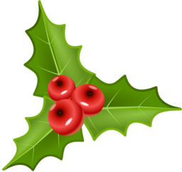 Houx Holly