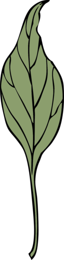 Ivy Leaf 4
