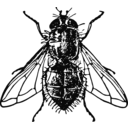 download Housefly clipart image with 135 hue color