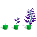 download Green Plant In Its Pot In Three Different Phases Of Growth clipart image with 135 hue color