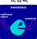 Degradation Anaerobie