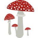 Mushrooms 4