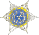 Haeckel Polycyttaria