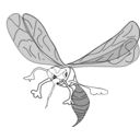 download Freehand Mosquito clipart image with 225 hue color