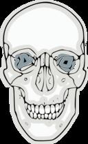 Digitalized Human Skull