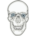 Digitalized Human Skull