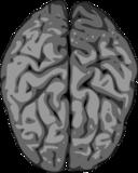 Grey Brain