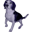 download Beagle Medium Version clipart image with 225 hue color