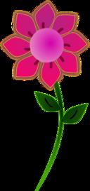 Pink Sun Flower