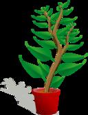 Green Tall Plant In Its Pot