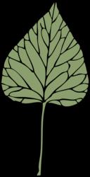 Ivy Leaf 6