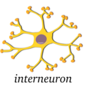 Neuron Interneuron