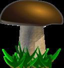 Mushroom Grybas