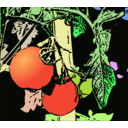 Illustration Tomaten