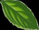 Mint Leaf Traced