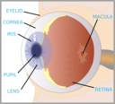 Eye With Labels