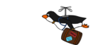 Migrating Penguin