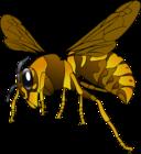 Brown Yellow Hornet