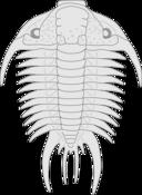 Trilobite Paraceraurus