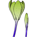 download Colored Crocus 1 clipart image with 135 hue color