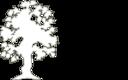 Simple Flowering Tree Outline