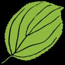 Serrate Leaf