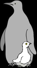 Architetto Pinguino Col Piccolo