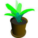 download Bromeliad In A Pot clipart image with 45 hue color