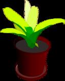 Bromeliad In A Pot