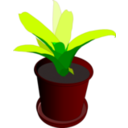 Bromeliad In A Pot