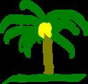 Palma De Cera Colombiana