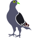 download Pigeon clipart image with 45 hue color