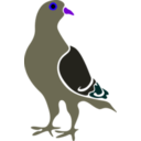 download Pigeon clipart image with 225 hue color