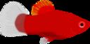 Aquarium Fish Xiphophorus Maculatus